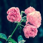 遺言について|遺言の基礎知識